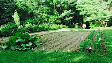 early garden