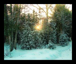 yard in Maine in winter