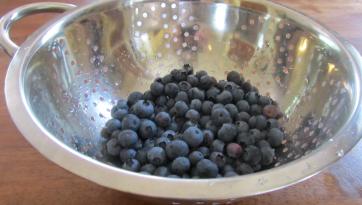 blueberries from garden
