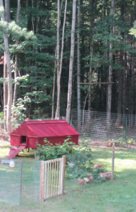 Chicken Coop in the Trees