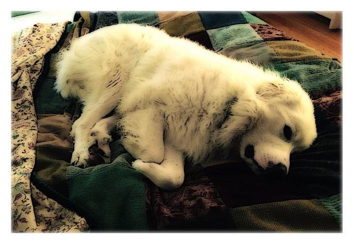 Gus's Nap